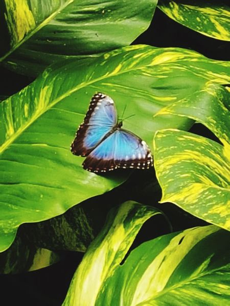 🦋 Leaf Plant Part Beauty In Nature No People Day Nature Butterfly - Insect