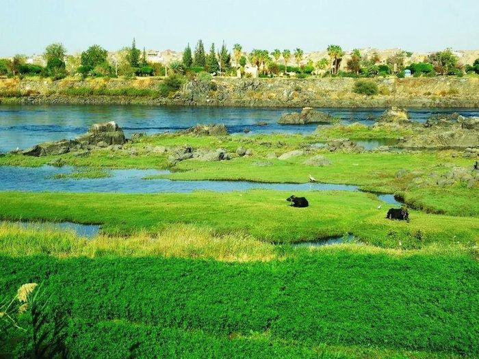 #South Egypt Nubia Nature Nile_river Pure Countryside Buffalo Green Blue Countryside Life South_people Kind_hearts Egypt