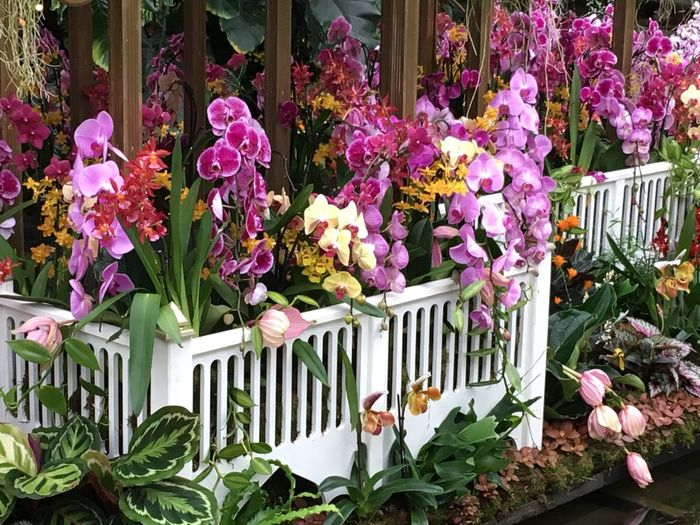 Orchids Flower Growth Plant Day Fragility Outdoors Nature Freshness No People Petal Variation Beauty In Nature Pink Color Flower Head Multi Colored Leaf Window Box