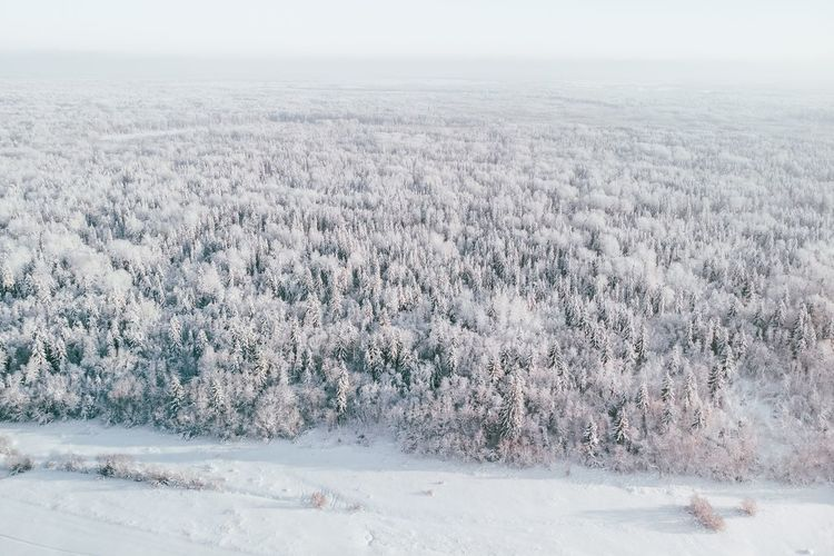 christmas tree Winter Trip Ski Forest Winter Environment Nature Snow Day No People Cold Temperature Landscape Scenics - Nature Beauty In Nature Outdoors Land Aerial View White Color Snowing My Best Photo