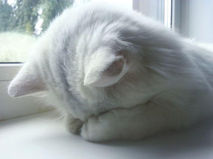 A piece of my happines and love 😻😸💞 Mycat♥ Angoracat Best  Catsagram Catoftheday Catlovers Sleeping Cat Cats 🐱