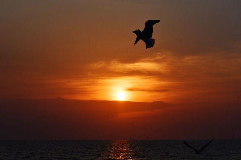 Bird Sea Full Length Sunset Water Silhouette Jumping Mid-air Men Sun Dramatic Sky Parachute Skydiving Windsurfing Capture Tomorrow