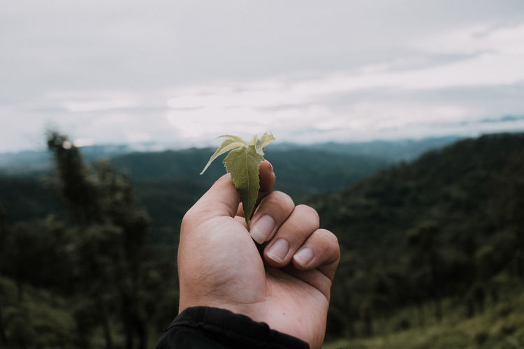 Cropped hand holding leaf against sky