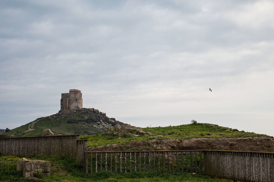 The old tower over Tharros Tharros Sardegna Sardinia Oristano Cabras Holiday History Ancient Tower Sunset Flying Freedom Old Ruin History Cloud - Sky Architecture Outdoors No People Built Structure Building Exterior Bird Travel Destinations Sky Ancient Civilization Day Animal Themes Nature