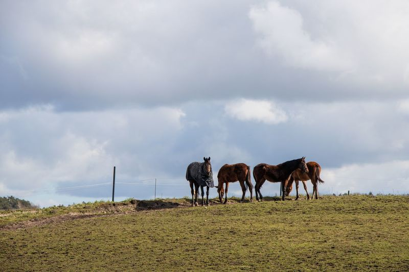 Horses on field against sky