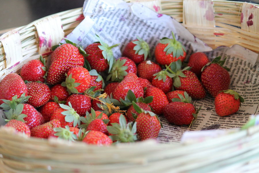 Fresh from garden Strawberry Food And Drink Healthy Eating Fruit Food Container Berry Fruit Freshness Basket Wellbeing Red Close-up No People Still Life Large Group Of Objects Wicker Indoors  Focus On Foreground Day Table Ripe