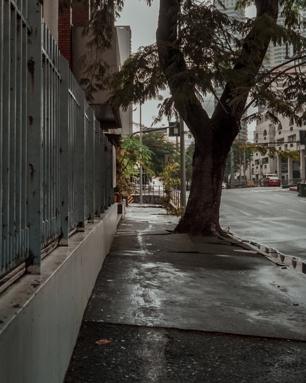 STREET AMIDST TREES AND BUILDINGS