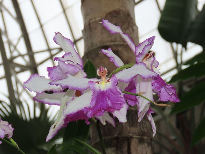 Orchids flowering plant tree trunk focus on the foreground beauty in nature close up Purple Flower Head No People