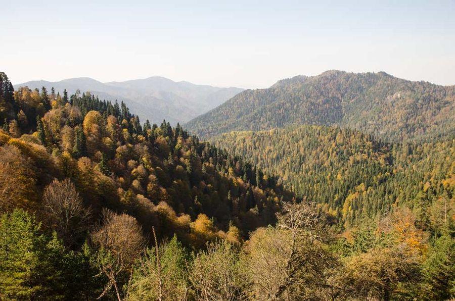 Nature Mountain Tree Beauty In Nature Sky Day Nikkon