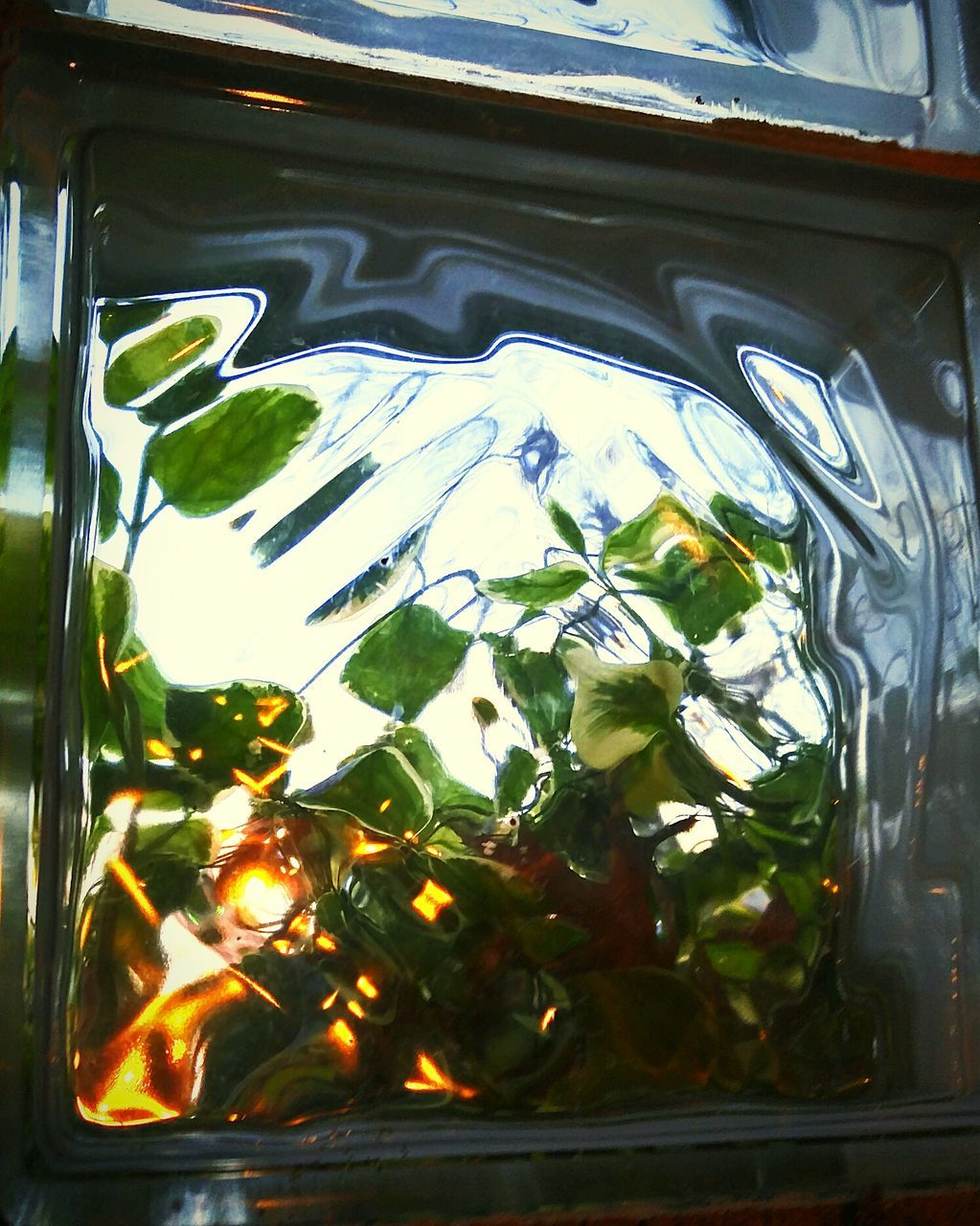 no people, close-up, leaf, refreshment, indoors, day, nature, freshness, water