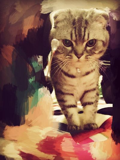 凶巴巴的小猫