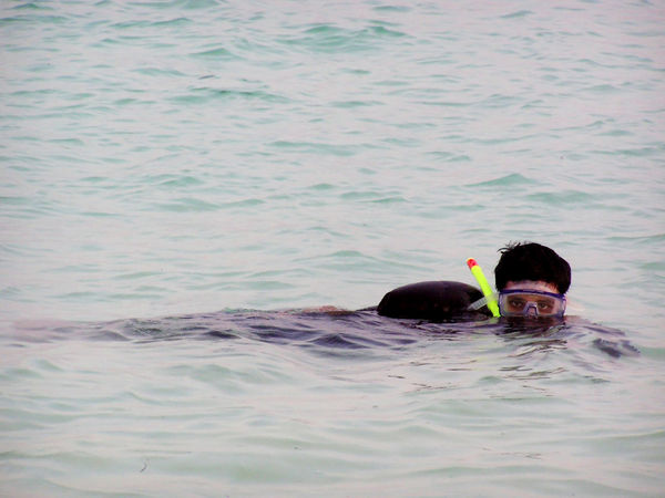 A person snorkeling in the shallow waters of the coastal lagoo in Kadamat island of the Lakshadweep Islands. You can see the snorkelling equipment covering the face of the person. Adult Arabian Sea Day One Person Outdoors People Snorkel Snorkeling Swimming Water