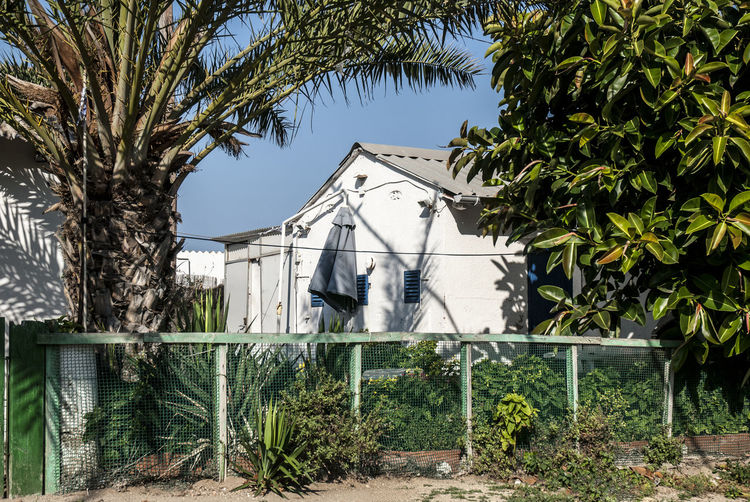 Badalona Architecture Building Exterior Built Structure Day Growth No People Outdoors Palm Tree Rosafrancomendoza Tree