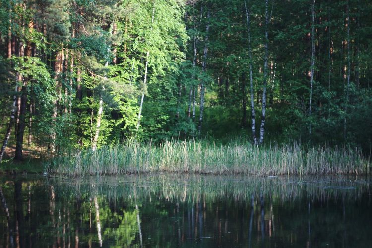 Relaxing Forest Water Reflections Nature Nature_collection EyeEm Nature Lover At The Forest Helios 44-2 58mm F2 Helios 44-2 Trees