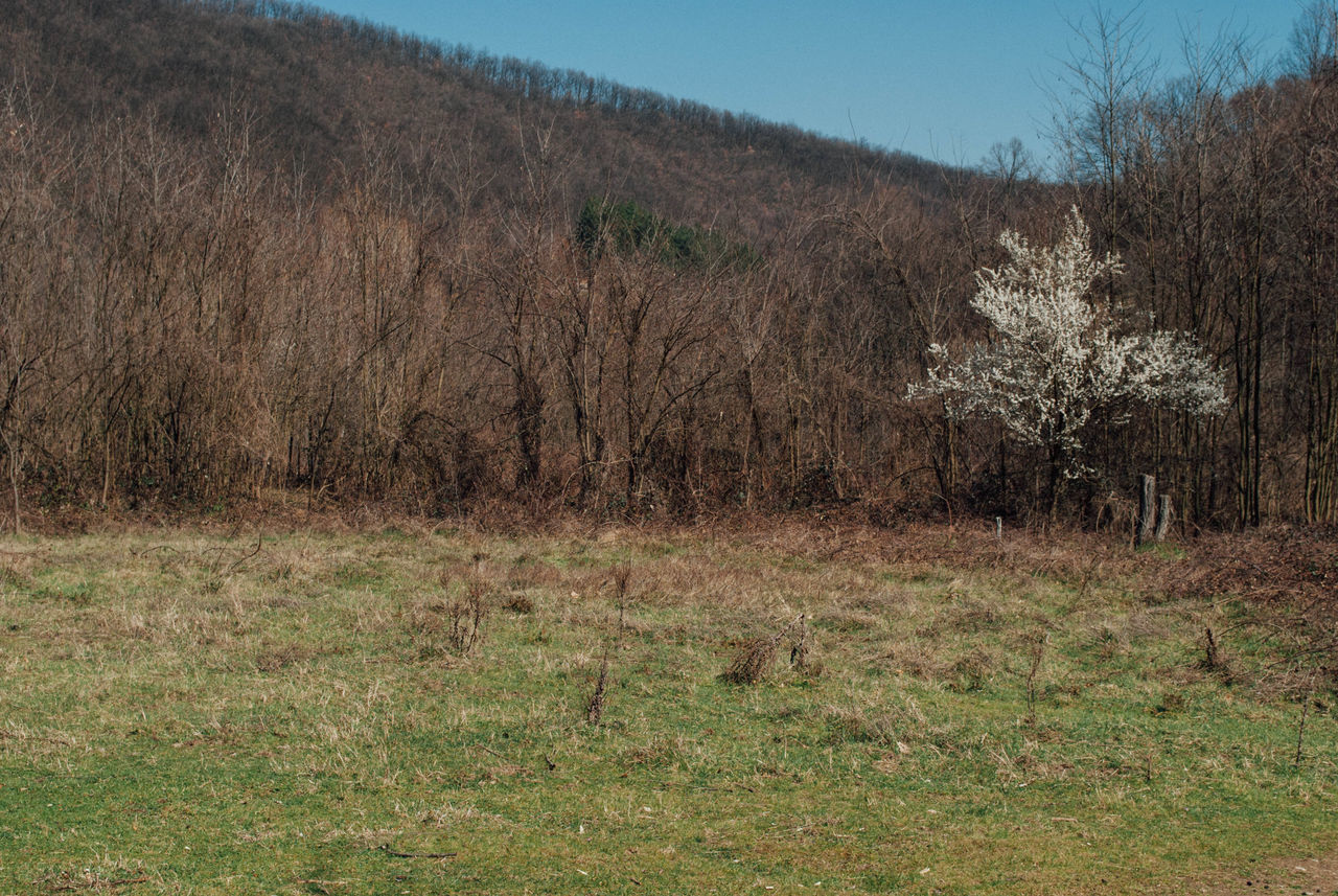 Scenic view of bare trees on landscape