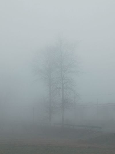 Bare trees in foggy weather
