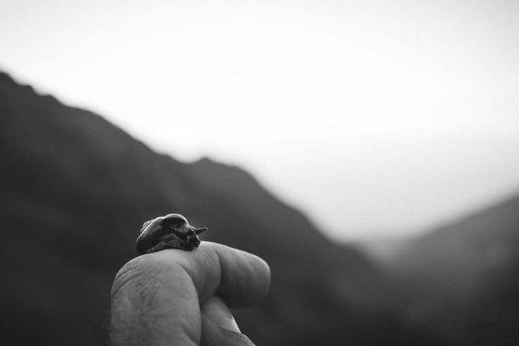 Cropped hand of person holding snail against sky