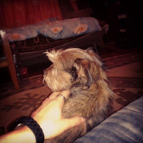 Lizu Dog Chill Goodtime