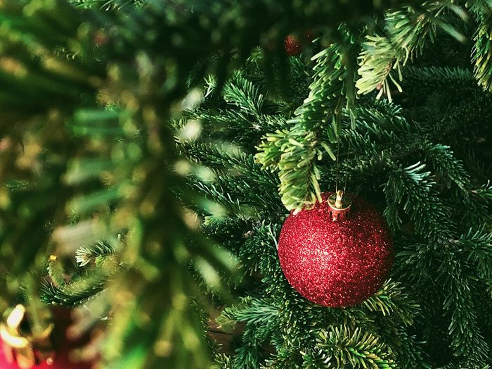 Christmas decoration 🎄... Ornament Christmas Spirit Coniferous Tree Conifer  Freshness Fir Tree Fir Glitter Mood Winter Holidays Christmastime Winter Bauble Christmas christmas tree Holiday Christmas Decoration Celebration Christmas Ornament Decoration Holiday - Event Pine Tree Growth Nature Close-up Green Color Red Hanging Branch No People