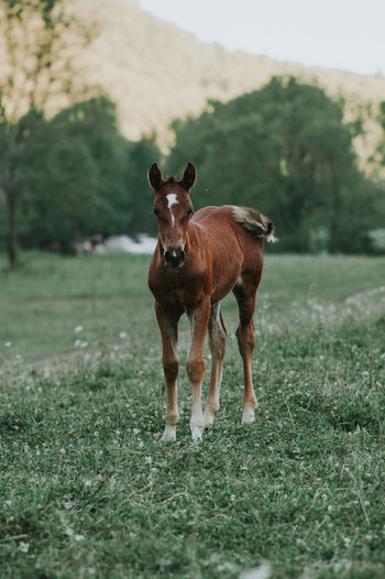 Portrait Of Foal Standing On Grassy Field