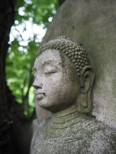 Spirituality Angel Art And Craft Belief Buddha Head Buddha Statue Close-up Craft Creativity Day Focus On Foreground Human Representation Idol Male Likeness No People Outdoor Outdoors Plant Religion Representation Sculpture Spirituality Statue Stone Material Tree