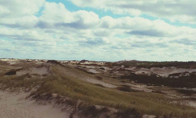 Sanddunes Beach Landscape