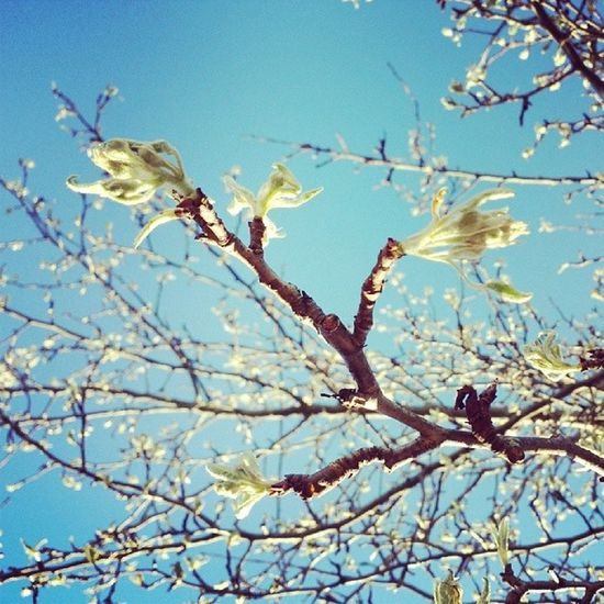 Loks like the apple tree is getting a lot more ready... Spring Sun Newbeginning Goodmorning
