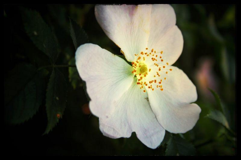 Flower335