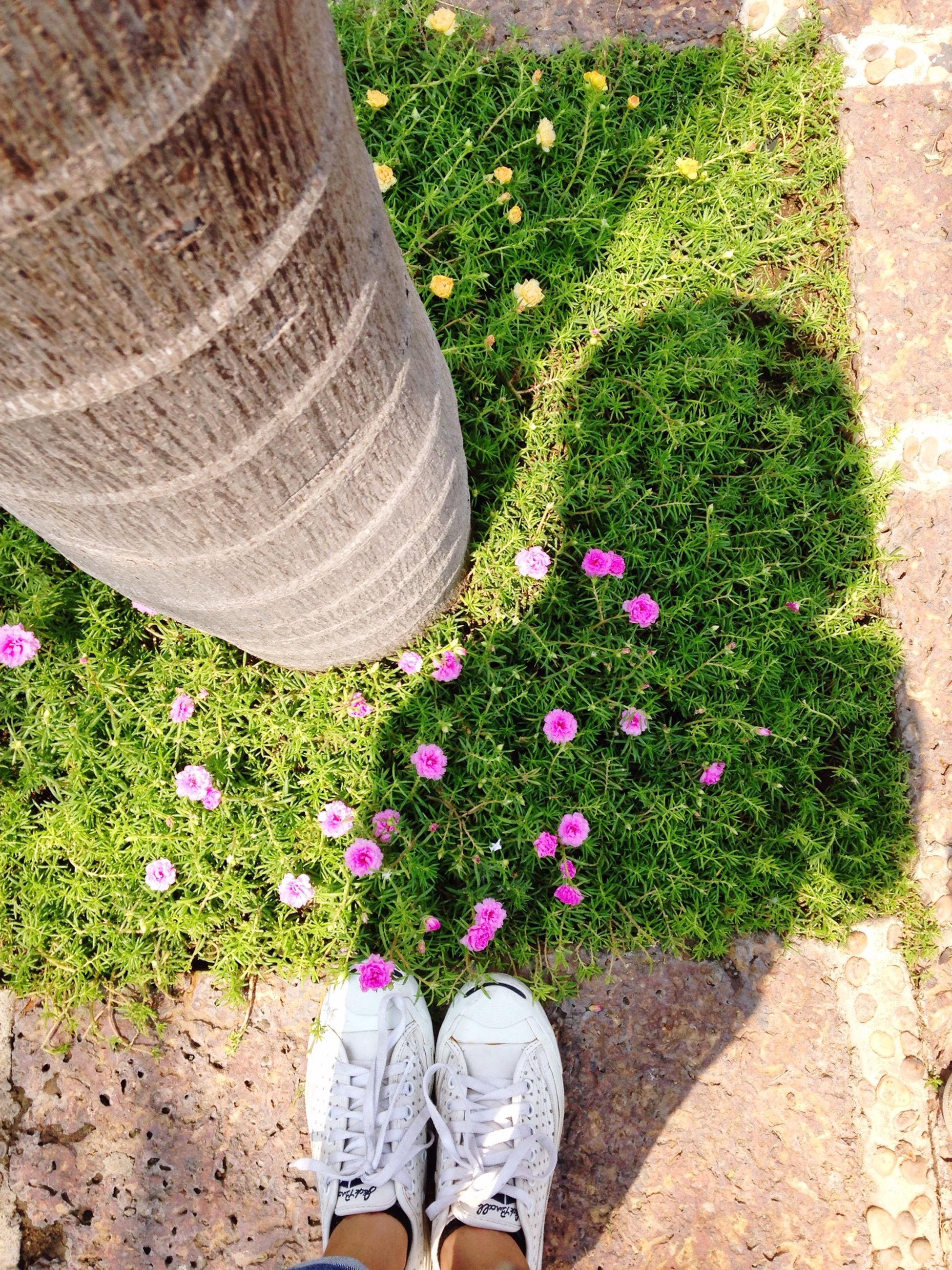 flower, low section, person, shoe, personal perspective, growth, standing, high angle view, freshness, plant, fragility, human foot, pink color, grass, field, petal, nature