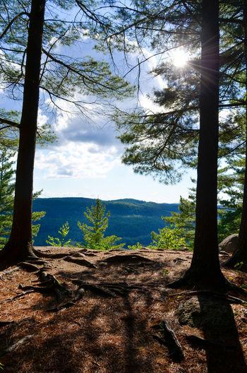 Tree Mountain Forest Tree Trunk Pine Tree Pinaceae Sunlight Shadow Sky Landscape Coniferous Tree Forest Fire Spruce Tree