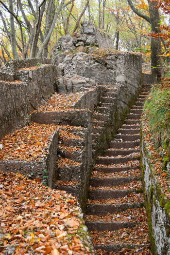 Tree Autumn Staircase Plant No People Nature Forest Architecture Steps And Staircases Plant Part History Leaf Solid Land Day Ancient Outdoors Built Structure Direction Change Trench First World War First World War Memorial