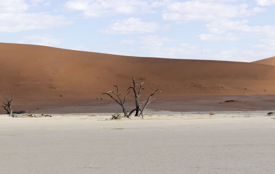 Arid Climate Bare Tree Beauty In Nature Cloud - Sky Day Deadvlei Desert Landscape Namib Desert Namibia Namibia Desert Namibia Landscape Nature No People Non-urban Scene Outdoors Physical Geography Remote Sand Sand Dune Scenics Sky Tranquil Scene Tranquility Tree