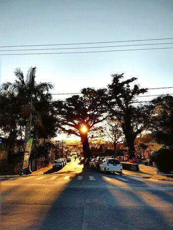 Figueira. Bird Tree Water Sunset Silhouette Car Sky Animal Themes
