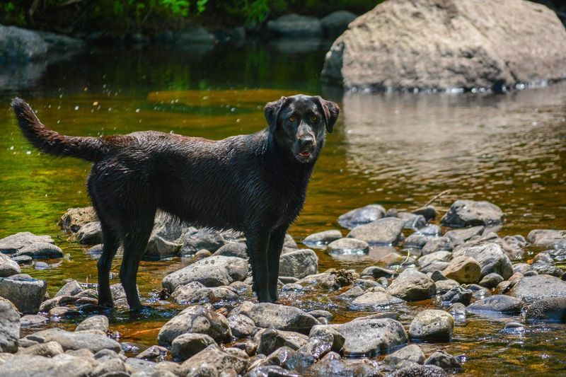 Dog standing on rock by lake