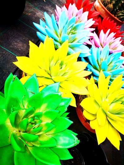 Flower Yellow Multi Colored Flower Head