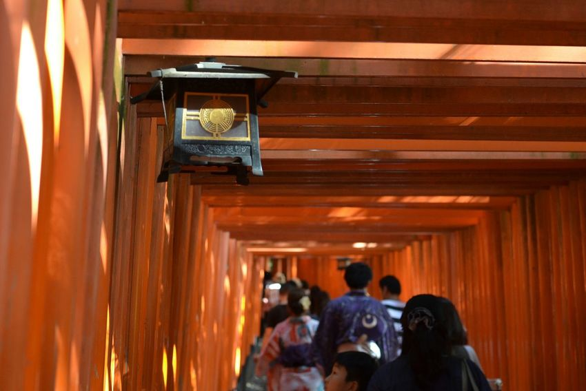 伏見稲荷大社 千本鳥居 稲荷神社 鳥居 Fushimi Inari Shrine Senbondorii Kyoto Travel Photography Kyotowalk Snapshot People Watching Light And Shadow Vanishing Point Japanese Shrine Inari Shrine Built Structure 京都 旅写真