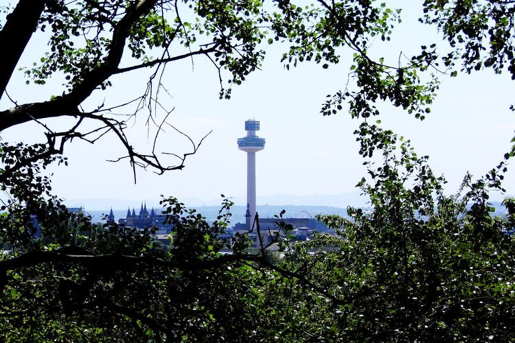 EyeEmNewHere Radiocitytower Tree No People Sky Outdoors Travel Destinations Day Nature Beauty In Nature Through Trees Radio City Tower Liverpool Everton Park View Clear Sky