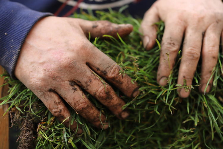 Close-up of hands holding grass