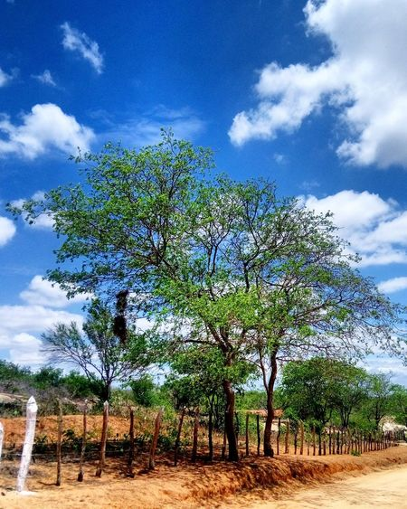 Cloud - Sky Sky Tree Nature No People Tranquility Paraíba / Brasil Rural Scene