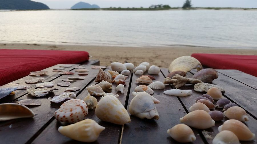Close-Up Of Seashells On Wooden Table At Beach Against Sky