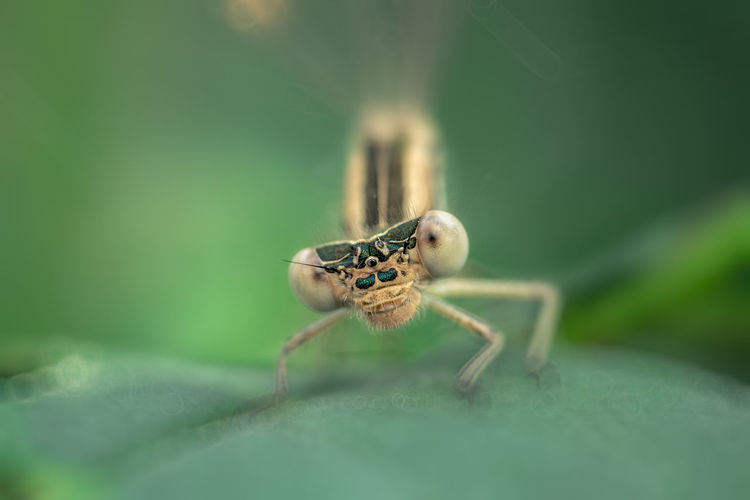Sly looks with one eye. Animal Animal Body Part Animal Eye Animal Leg Animal Themes Animal Wildlife Animals In The Wild Arachnid Arthropod Close-up Day Green Color Insect Invertebrate Leaf Nature No People One Animal Outdoors Plant Part Selective Focus Spider Zoology EyeEmNewHere