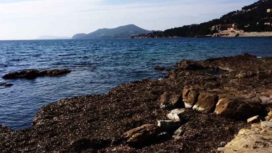 Sunshine Sea Swimming