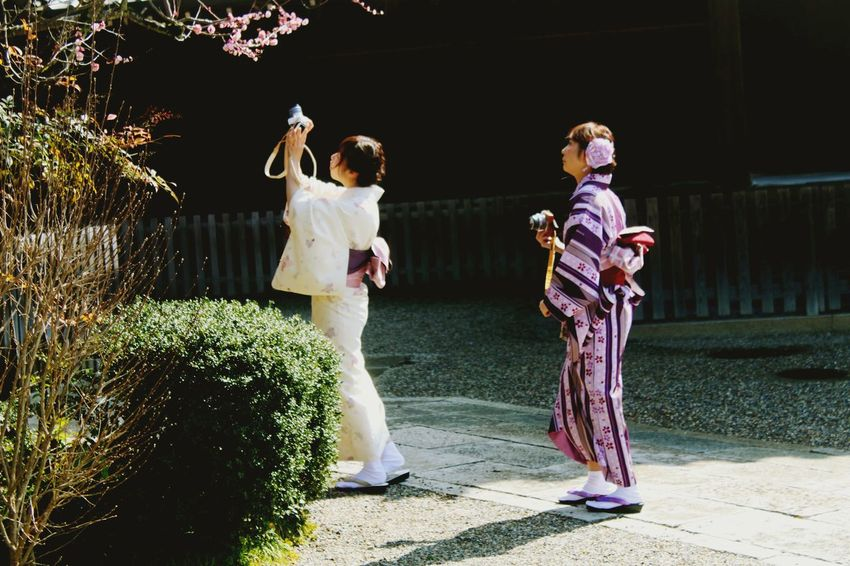 Japan Sakura Blossom Sakura Excitement Japanese Tradition Popular Photos People Taking Pictures Open Edit Colors Light And Shadow Urban Spring Fever