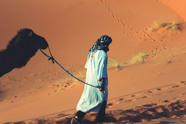 Sahara Desert Morocco Merzouga Camel Sand Animal Adult Adventure Berber  One Man Only Day Connected By Travel