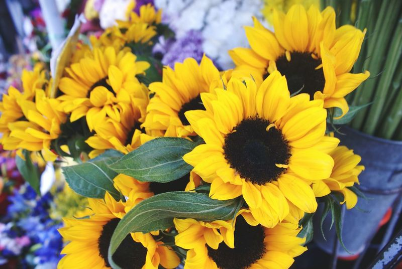 Relax&Enjoy Flowpow Sunflowers🌻 Create Yourself A Good Day Positive Thoughts Energía