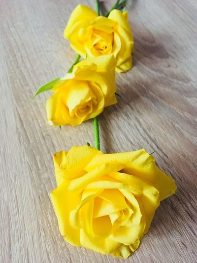 Yellow roses Flowers Roses Yellow High Angle View Indoors  Freshness Wood - Material Table No People Close-up Day