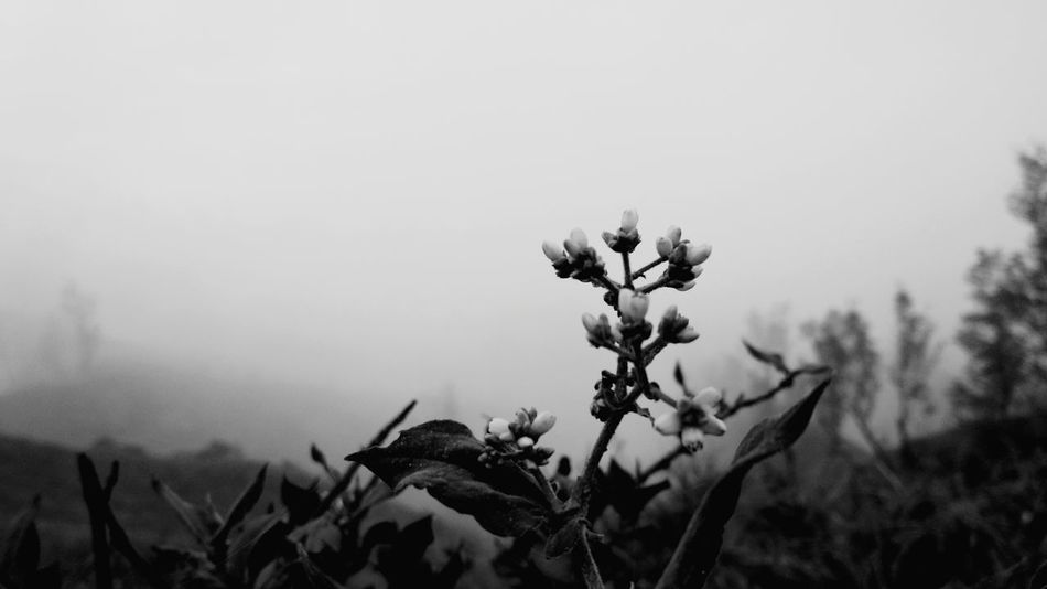 Black And White Friday EyeEm Selects Flower Nature Beauty In Nature Close-up Freshness Springtime Plant EyeEmNewHere
