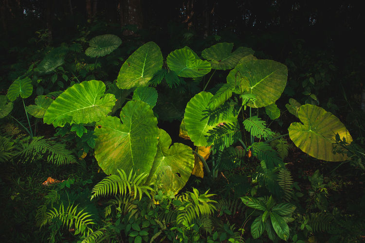 Still Life In Bloom Green Color Leaf Plant Plant Part Growth Nature Beauty In Nature No People Close-up Outdoors Tranquility Leaves Freshness My Best Photo