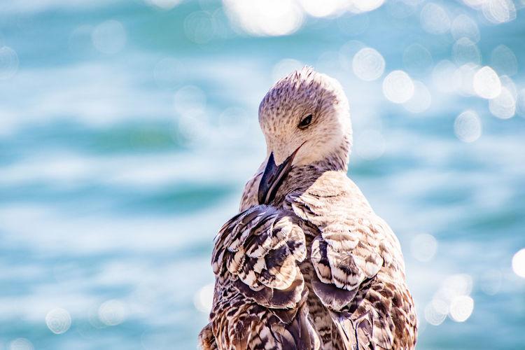 Close-Up Of Bird Against Sea