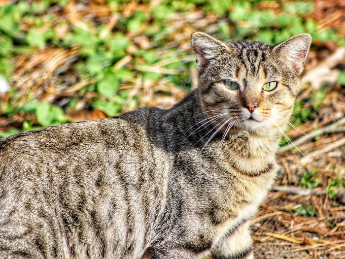 My buddy Sam. Animal Themes One Animal Mammal Looking At Camera Domestic Animals Pets Domestic Cat No People Portrait Feline Close-up Outdoors Day Grass Animals In The Wild Nature Pet Portraits